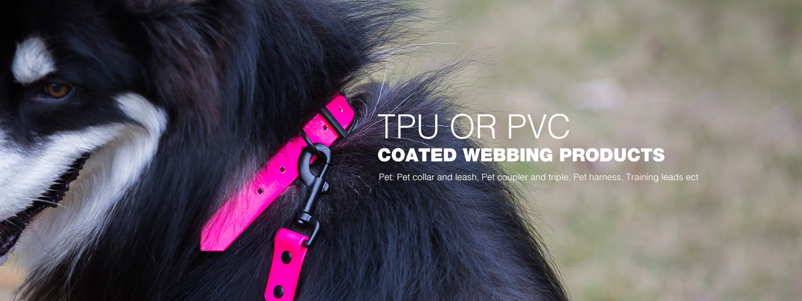 Solid Color TPU Leashes