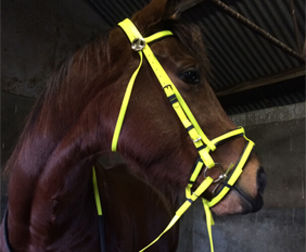 Neon yellow draft horse riding bridle PVC supplier manufacturer