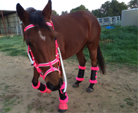 Fancy stitched horse bridles tack wholesale for sale hot pink