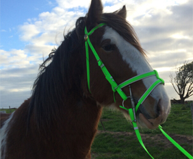 Lime green english bridle with double nosebands in PVC on sale